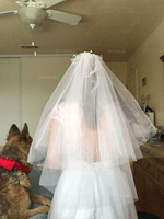 Two-tier Cut Edge Elbow Bridal Veils (006219341)